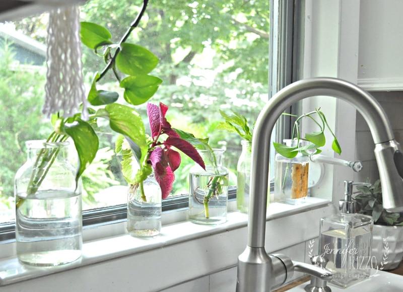 گیاهان مناسب پنجره آشپزخانه