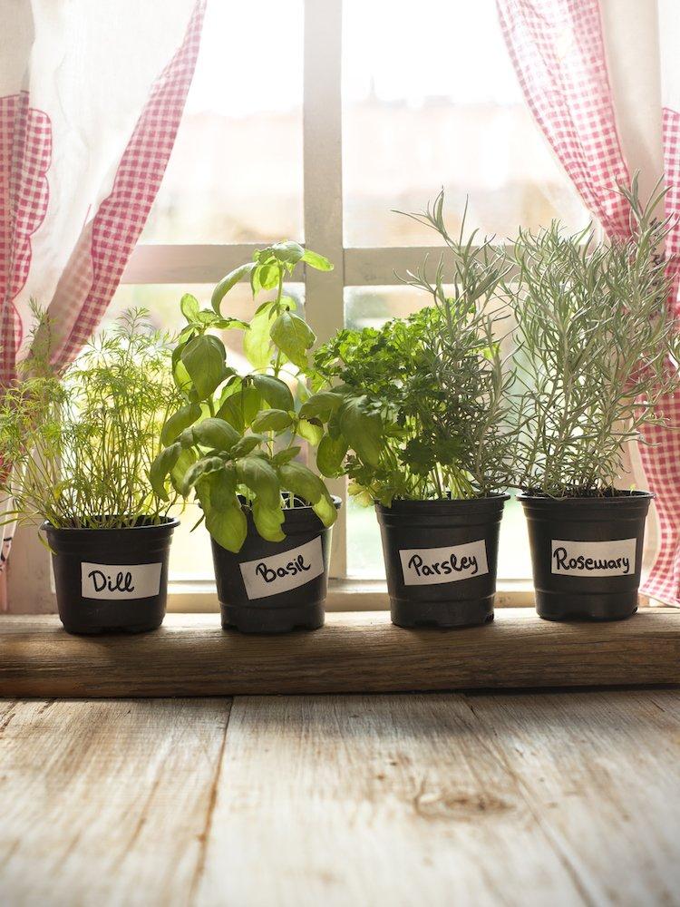 رزماری از گیاهان خوراکی در آشپزخانه